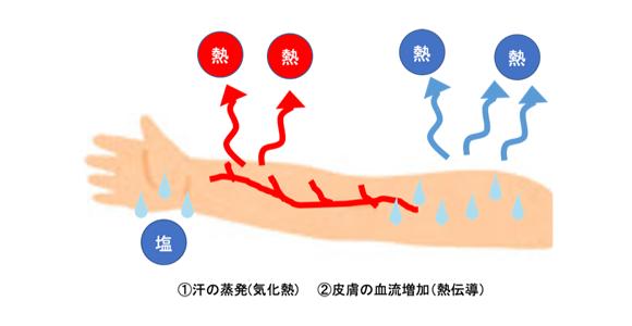 図1.体温調整のメカニズム
