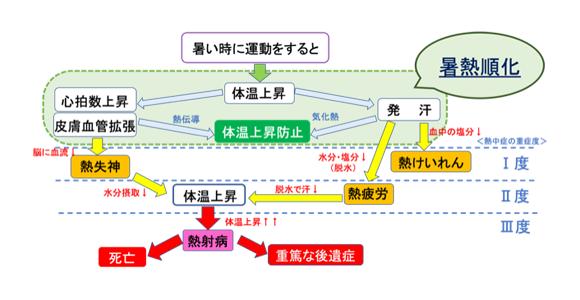 図2.熱中症のメカニズムと暑熱順化